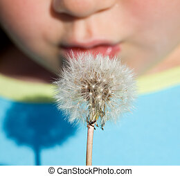 Kid bläst Dandelion Samen - Nahaufnahme.