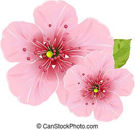 Kirschblütenblüten.