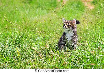 Kitten spielt in einem grünen Gras.