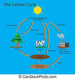 kohlenstoff, zyklus