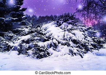 landschaftsbild, nacht, winter