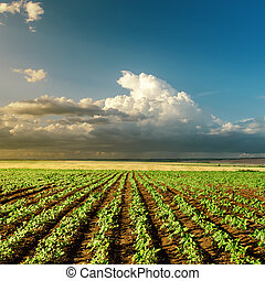 landwirtschaft, grün, sonnenuntergangfeld