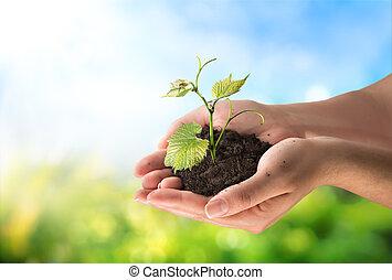 Landwirtschaftskonzept, kleine Pflanze.