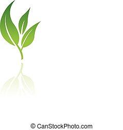 Leaf 8.