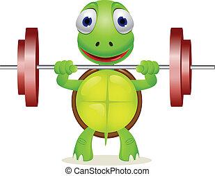 Lustiger Schildkrötenlift