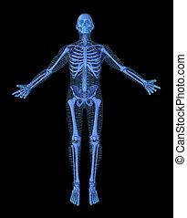 Mann, der Yoga macht, 3D-Mesh andere Skelett-Modell. 3D Illustration Konzept