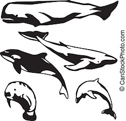 Meeressäugetiere