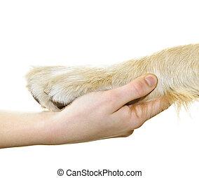 Menschliche Hand hält Hundepfote