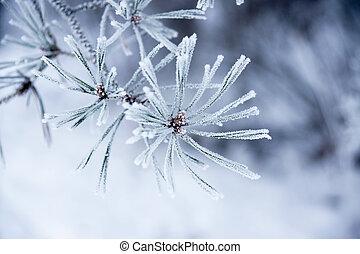 Nadeln im Winter