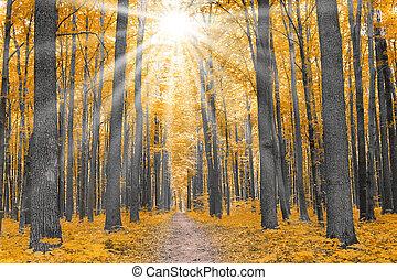 Natur. Wald im Herbst