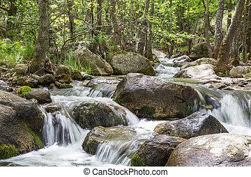 Naturlandschaft mit Bäumen und Fluss.