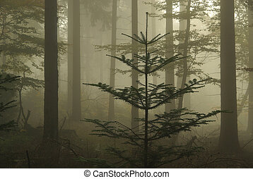 nebel, 06, wald