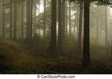 nebel, 15, wald