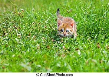 Orange Kätzchen spielt in einem grünen Gras.