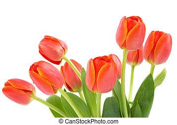 Orangen Tulpen