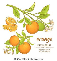 Oranger Vektor eingestellt.