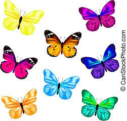 papillon, satz, ikone