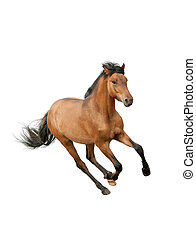 Pferd isoliert