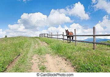 pferd, sky., hell, hölzern, brauner, blaues, zaun, ukraine, carpathians.