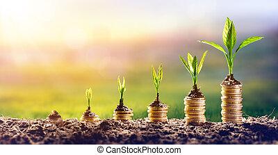 pflanze, begriff, finanz, geld, geldmünzen, -, wachsen, investition