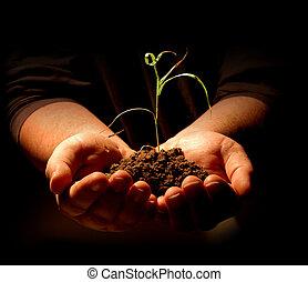pflanze, halten hände