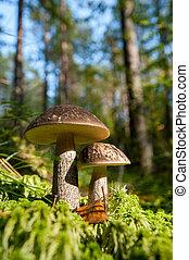 Pilz im Wald.