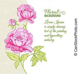 Pink Peonies Hintergrund mit Mustertext