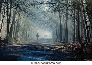 poland., nebel, starke , straße, sonnenstrahlen, wald