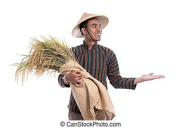raum, freigestellt, aus, asiatisch, landwirt, weißes, ausstellung, kopie, hintergrund