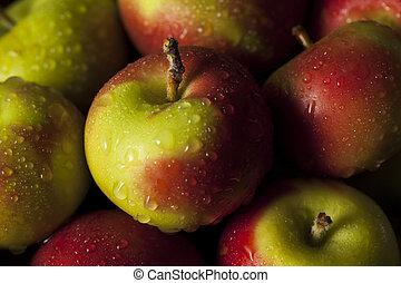 Raw organische Lady Äpfel.