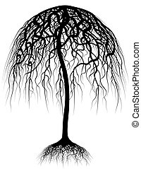 Regenbaum
