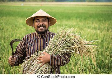 reis, asiatisch, landwirt, korn, hand
