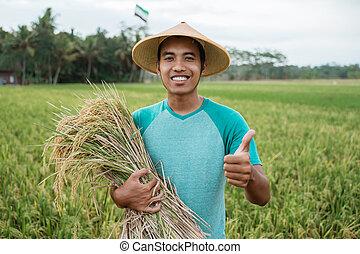 reis, besitz, daumen, landwirt, korn, ausstellung, auf