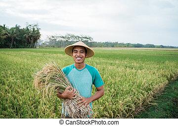 reis, besitz, lächeln, asiatisch, landwirt, paddy, korn