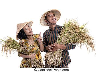 reis, besitz, raum, schauen, während, landwirt, korn, paar, kopie, auf
