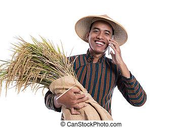 reis, besitz, rufen, während, asiatisch, landwirt, telefon, machen, korn