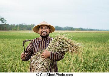reis, besitz, traditionelle , indonesisch, landwirt, korn, tuch