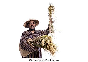reis, besitz, traditionelle , javanese, landwirt, korn, tuch