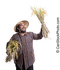 reis, besitz, traditionelle , landwirt, angehobene hand, begeistert froh