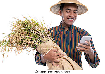 reis, besitz, während, korn, landwirt, smartphone, gebrauchend
