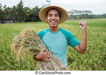 reis, jahreszeit, ernte, landwirt, aufgeregt, während