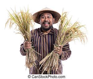 reis, korn, paddy, ausstellung, landwirt, glücklich, seine, aufgeregt