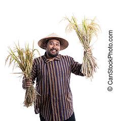 reis, seine, korn, landwirt, paddy, begeistert froh, ausstellung
