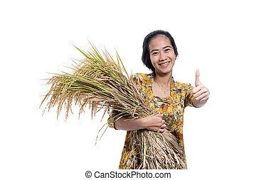 reis, weibliche , daumen, asiatisch, landwirt, paddy, korn, hand, ausstellung, auf