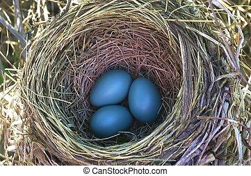 Robin-Eier
