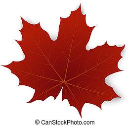Rotes Ahornblatt auf weißem Hintergrund.