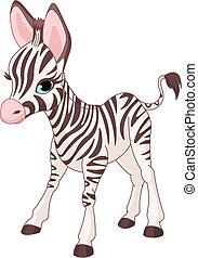 Süße Zebrafohlen
