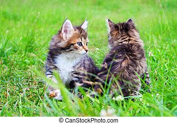 Schöne Kätzchen spielen in einem grünen Gras.