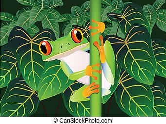 Schöner Frosch