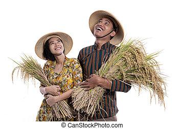 schauen, raum, reis, korn, während, besitz, landwirt, kopie, auf, paar